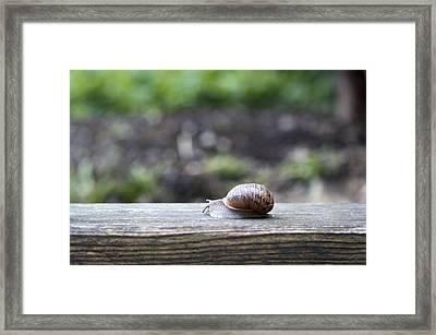Tired Snail Framed Print by Helga Novelli