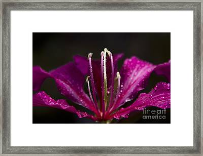 To Be Blessed Framed Print by Sharon Mau