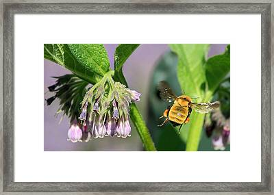 To Infinity And Beyond  Framed Print by Donna Kennedy