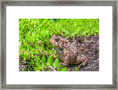 Toad In The Grass Framed Print by Randy Steele
