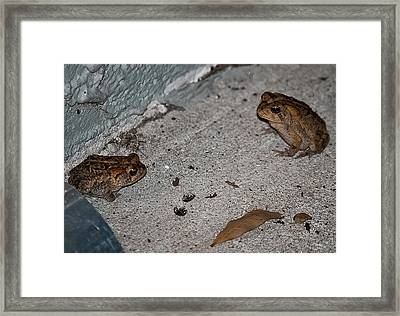 Toad Talk Framed Print by DigiArt Diaries by Vicky B Fuller