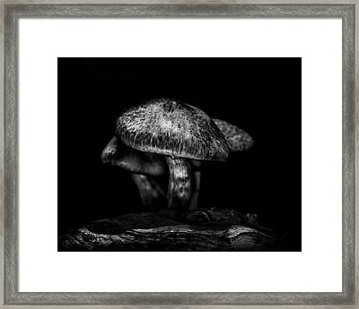 Toadstools On A Toronto Trail 1 Framed Print by Brian Carson