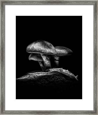 Toadstools On A Toronto Trail No 3 Framed Print by Brian Carson