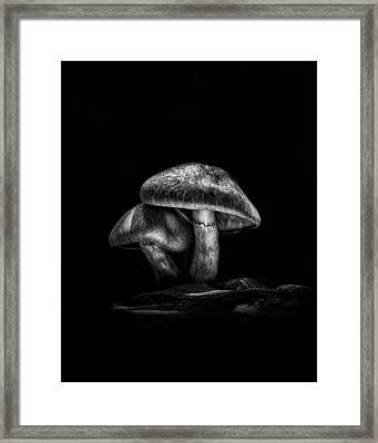 Toadstools On A Toronto Trail No 2 Framed Print by Brian Carson