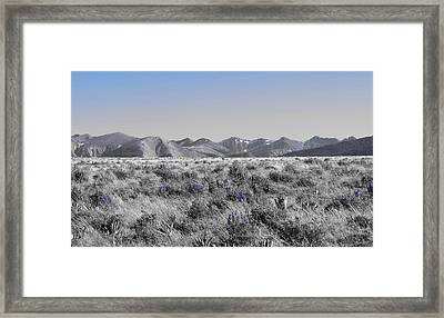 Tobacco Roots Framed Print by Leah Grunzke
