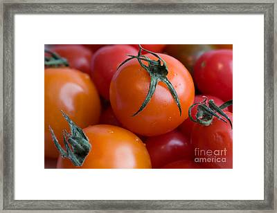 Tomatoes  Framed Print by A New Focus Photography