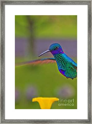 Tom's Serious Look Framed Print by Al Bourassa