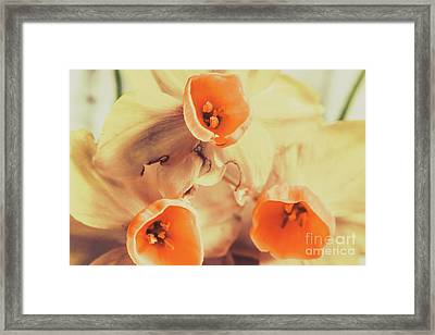 Toned Vintage Spring Daffodils Framed Print by Jorgo Photography - Wall Art Gallery