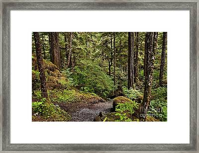Tongass National Forest Framed Print by John Greim