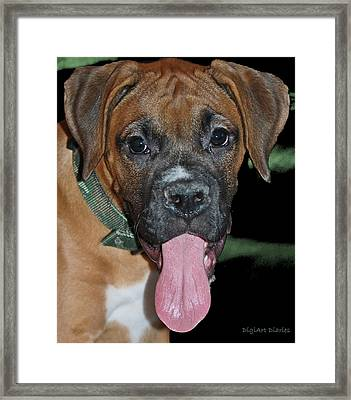 Tongue Lasher Framed Print by DigiArt Diaries by Vicky B Fuller
