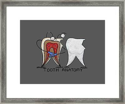 Tooth Anatomy T-shirt Framed Print by Anthony Falbo