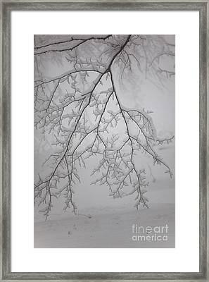 Touch The Ground Framed Print by Gabriela Insuratelu