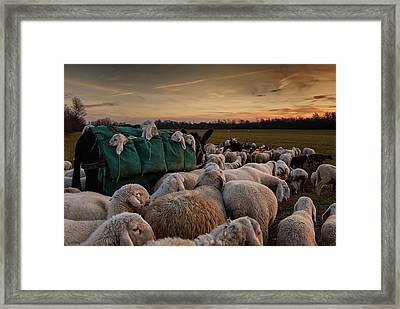 Toward New Grasslands Framed Print by Aida Ianeva