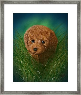 Toy Poodle Puppy Framed Print by Michael Conley