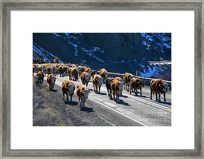 Traffic Jam Framed Print by Mike Dawson