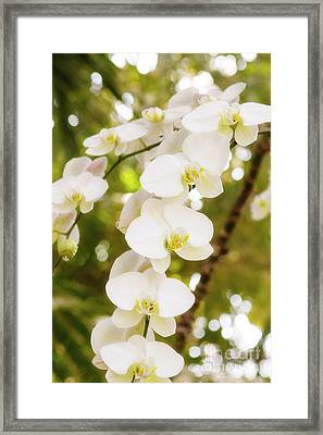 Trailing Orchids Framed Print by A New Focus Photography