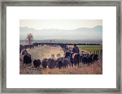 Trailing The Herd Framed Print by Todd Klassy