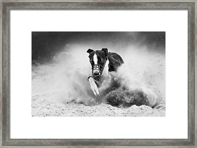 Training Greyhound Racing Framed Print by Muriel Vekemans