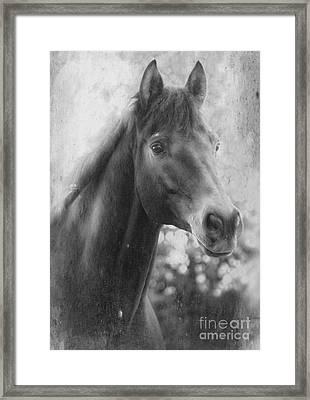 Trakehner Framed Print by Clare Bevan
