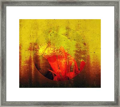 Translucent Framed Print by Lisa S Baker