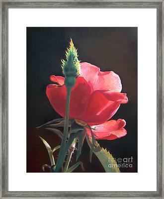 Translucent Rose Framed Print by Nanybel Salazar