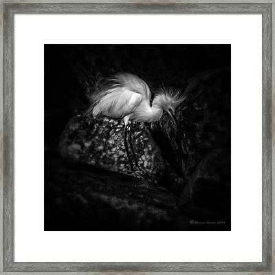 Tread Lightly Framed Print by Marvin Spates