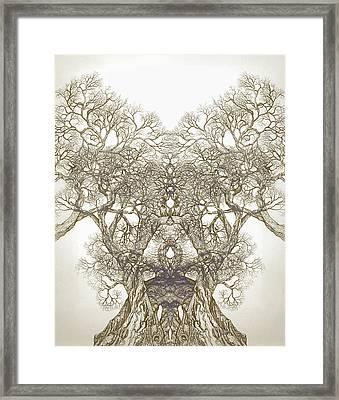 Tree 20 Hybrid 1 Framed Print by Brian  Kirchner