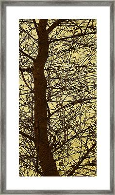 Tree Abstract In Yellow No 3 Framed Print by Ben and Raisa Gertsberg