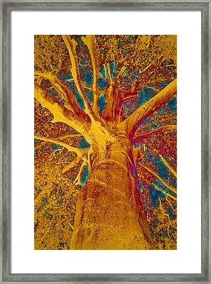 Tree Crown Framed Print by Frank Tschakert