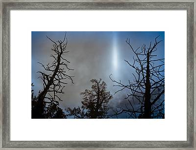 Tree Flash Framed Print by Scott Sawyer