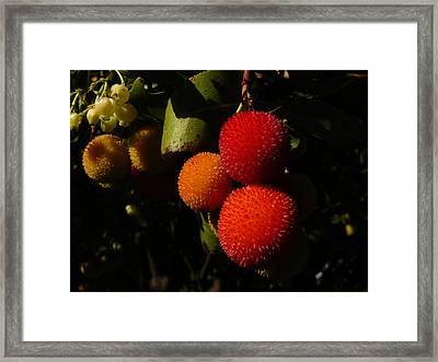 Tree Fruit Framed Print by Terry Perham