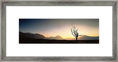 Tree Glencoe Highlands Scotland Framed Print by Panoramic Images