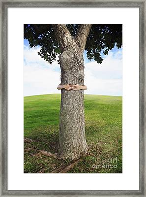 Tree Hugger 3 Framed Print by Brandon Tabiolo - Printscapes