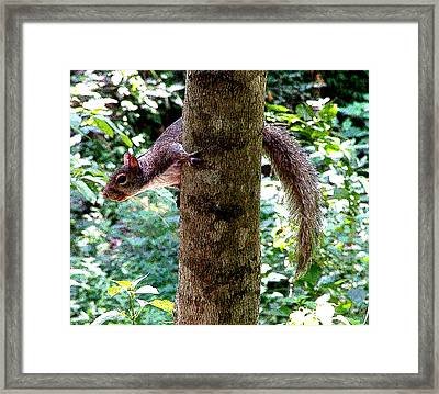 Tree Hugger Framed Print by Mindy Newman