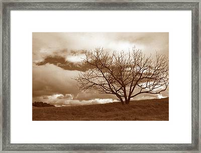 Tree In Storm Framed Print by Kathy Yates
