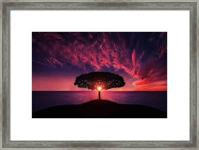 Tree In Sunset Framed Print by Bess Hamiti