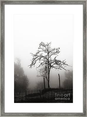 Tree In The Mist Framed Print by Luigi Morbidelli
