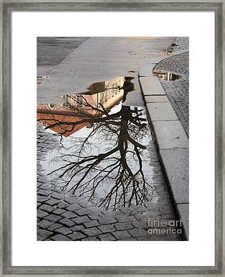 Tree In The Puddle Framed Print by Michal Boubin