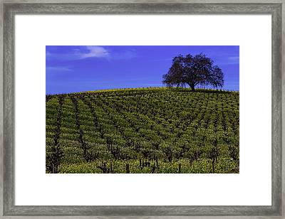 Tree In The Vineyards Framed Print by Garry Gay
