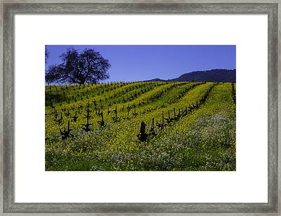 Tree  In Vineyards Framed Print by Garry Gay