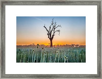 Tree Of Life Framed Print by Az Jackson