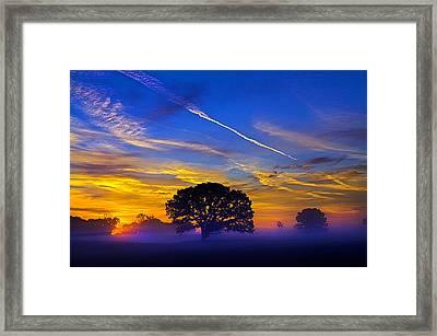 Tree Of Life Framed Print by Phil Koch