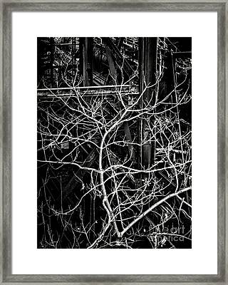 Tree Of Non Life Framed Print by Olivier Le Queinec