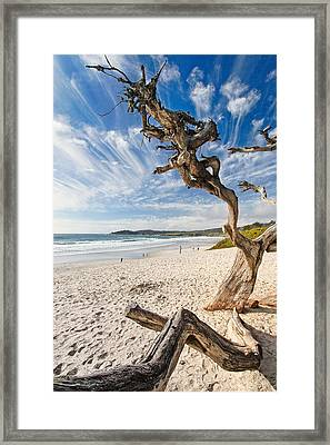 Tree On A Beach Carmel By The Sea California Framed Print by George Oze