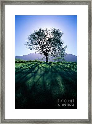 Tree On Grassy Knoll Framed Print by Carl Shaneff - Printscapes