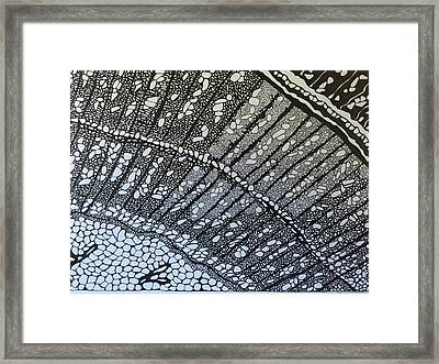 Tree Root Framed Print by Trish Sierer