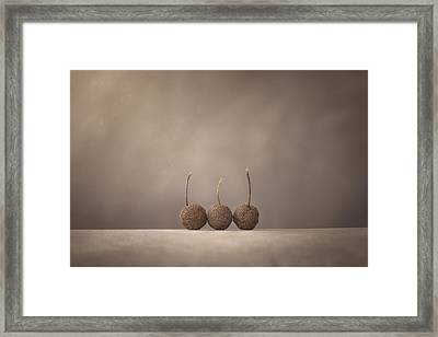 Tree Seed Pods Framed Print by Scott Norris