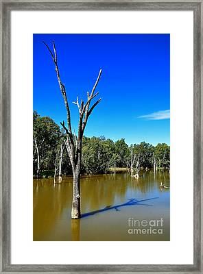 Tree Stumps In Beauty Framed Print by Kaye Menner