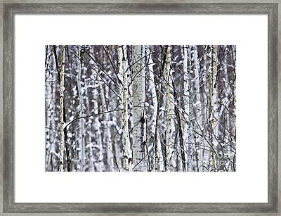 Tree Trunks Covered With Snow In Winter Framed Print by Elena Elisseeva