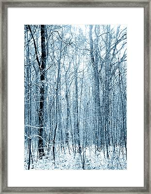 Tree Trunks Pattern Framed Print by Svetlana Sewell
